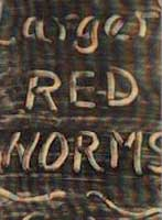 LARGER RED WORMS